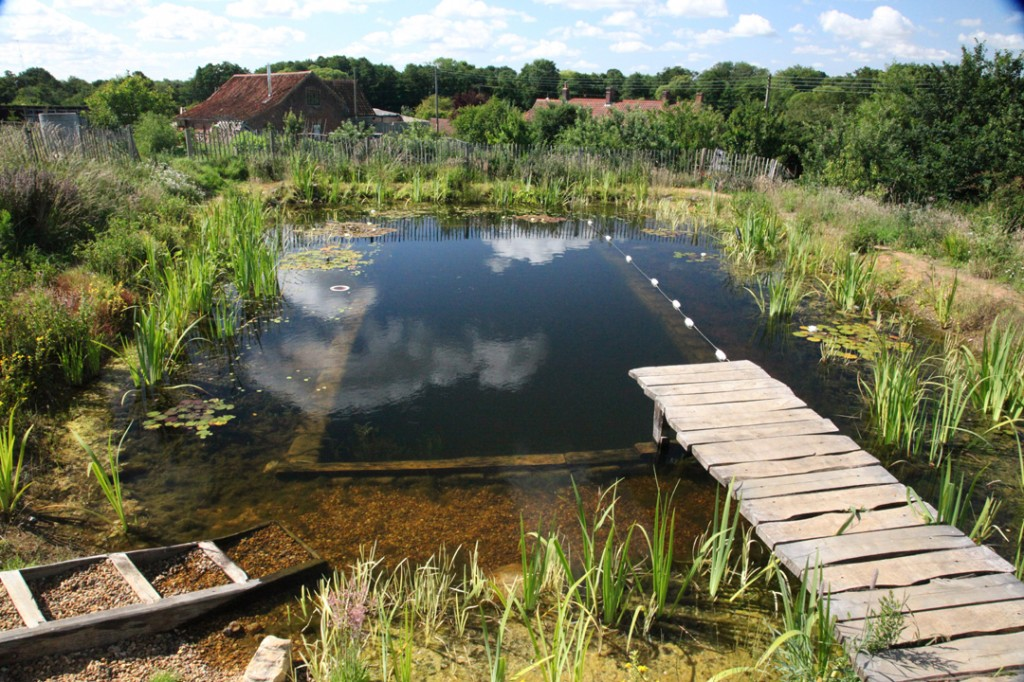 Natural swimming pools with david pagan butler pvp071 for Sustainable swimming pools