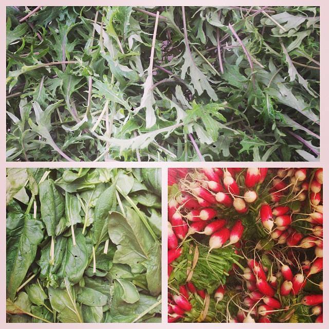 Spring crops: arugula, spinach, radishes.