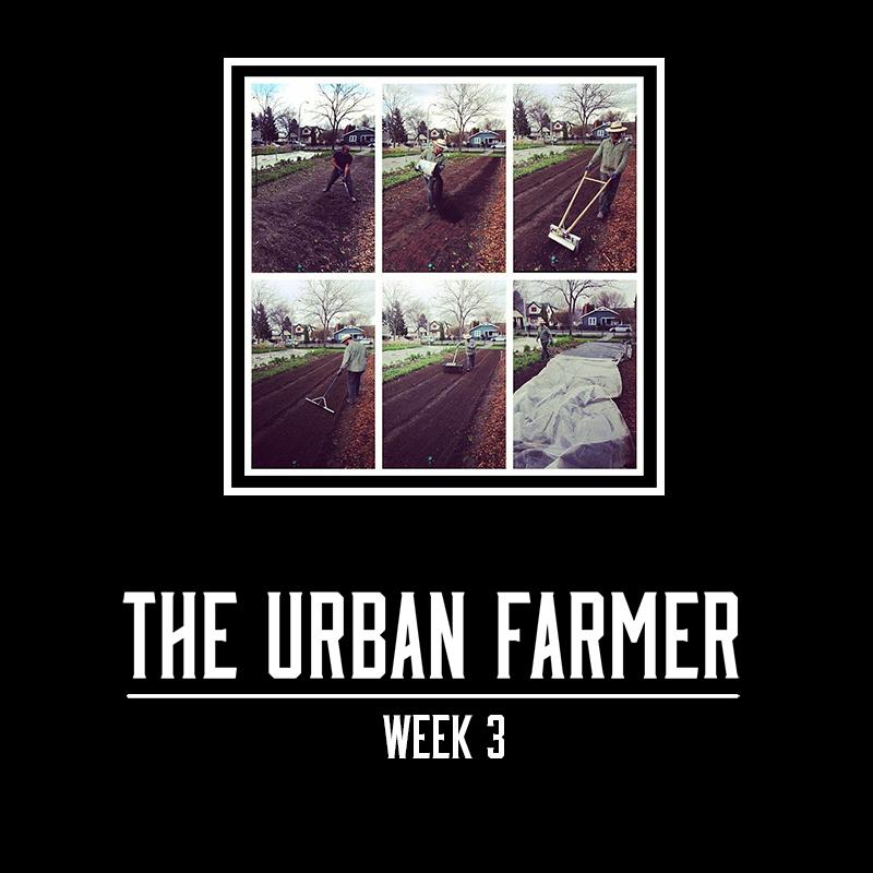 The Urban Farmer - Week 3 - Small