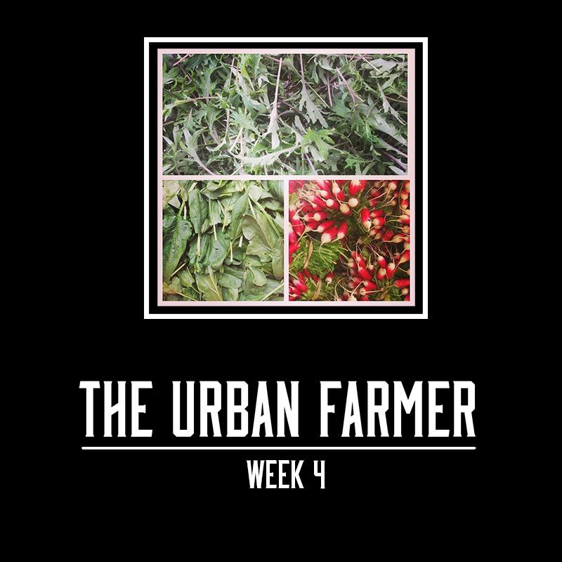The Urban Farmer - Week 4 - Small