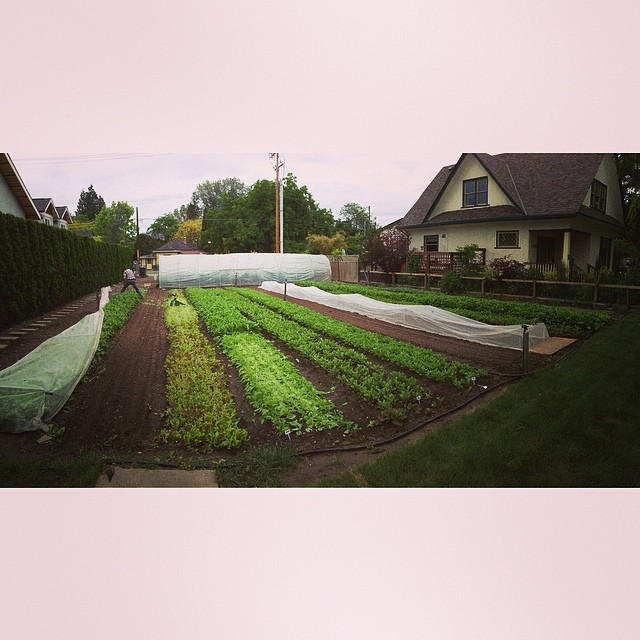 Greens growing at Green City Acres.