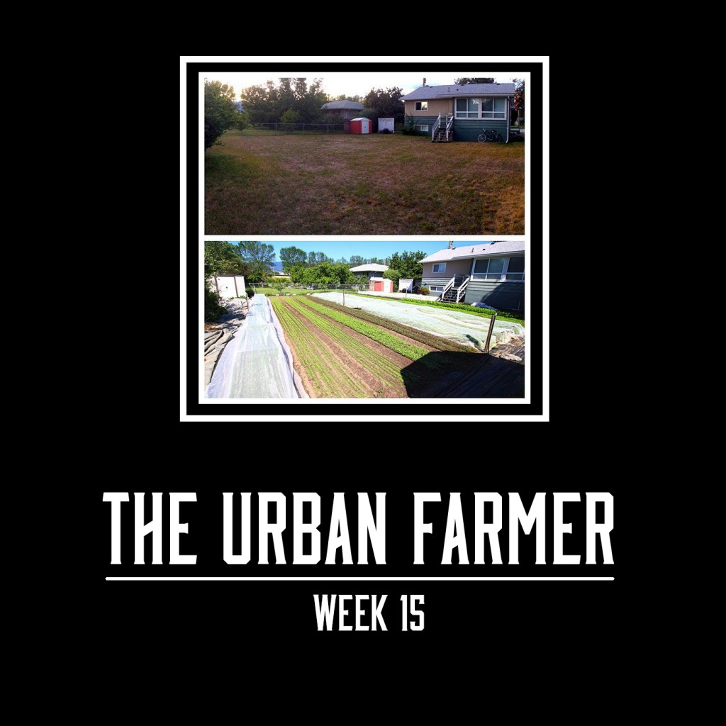The Urban Farmer