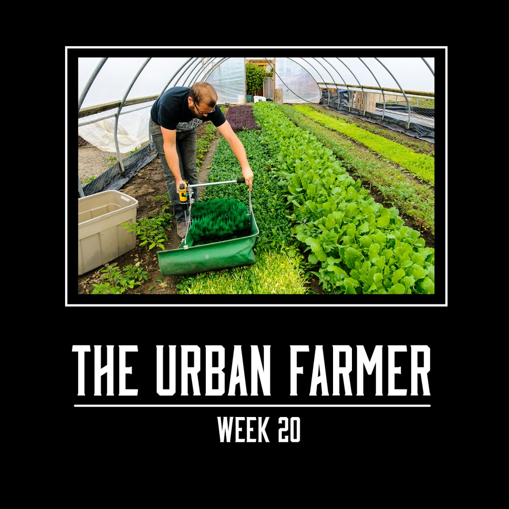 The Urban Farmer Week 20