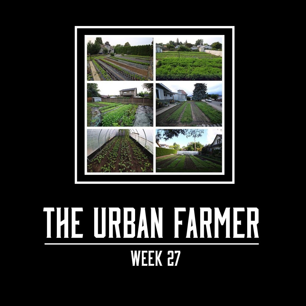 The Urban Farmer Week 27