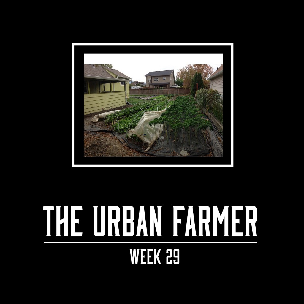 The Urban Farmer Week 29
