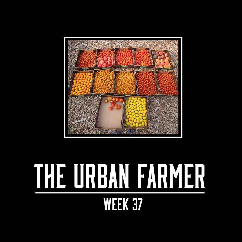 Week 37